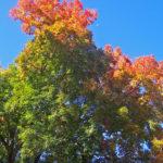 mudança, árvore, céu