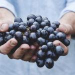 autêntica, uvas, mãos