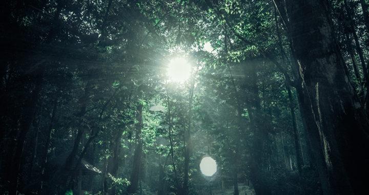 graça entrar, floresta, luz, esperança