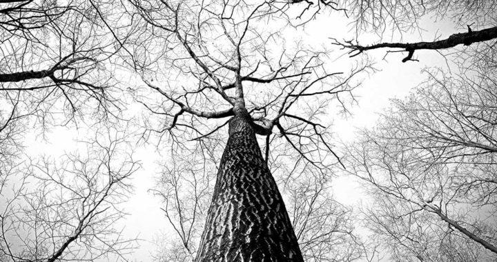 as ramificações pessoais, árvores secas